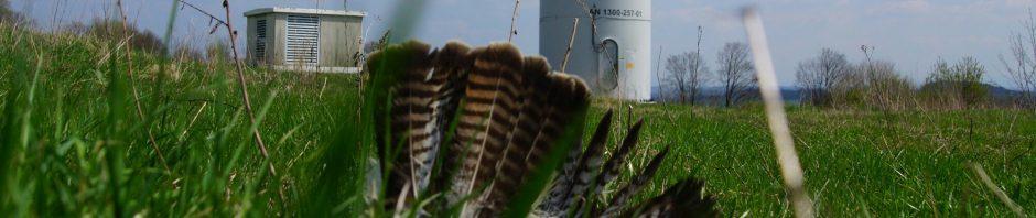 Anflugopfer Mäusebussard im Windpark goldener Steinrück bei Lautertal und Ulrichstein im EU Vogelschutzgebiet Vogelsberg am 2018-04-17